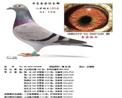 丹东鑫鼎八关鸽王185名
