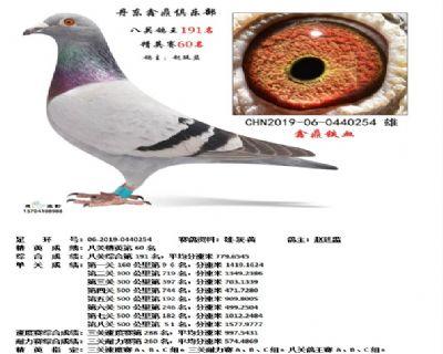 丹东鑫鼎八关鸽王191名