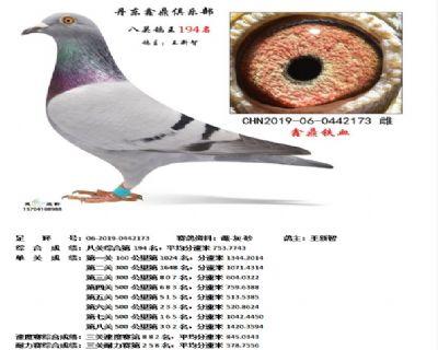 丹东鑫鼎八关鸽王194名