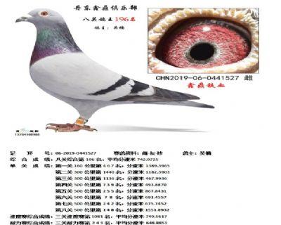 丹东鑫鼎八关鸽王196名