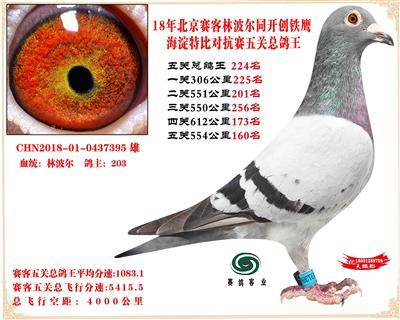 18赛客林波尔铁鹰海淀2万羽四关对抗赛总鸽王224名是雌鸽