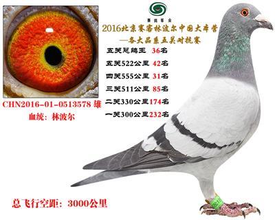 16北京赛客、铁鹰8400羽四关特比环对抗赛55名