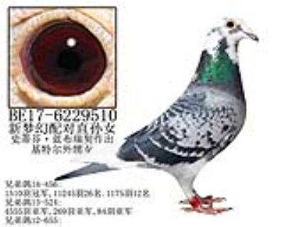 史蒂芬·蓝布瑞契原舍-4