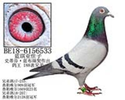 史蒂芬·蓝布瑞契原舍-5