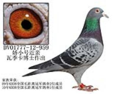 瓦季卡博士原舍-24