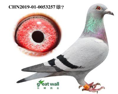17.鲁道血系.0053257