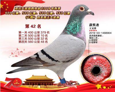 C�M四�P��王42