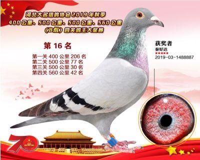 B�M四�P��王16