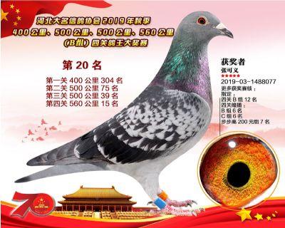 B�M四�P��王20