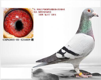 D8.�钯R��曼起�c�血系.1214839
