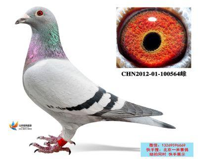 2.詹森血系.100564