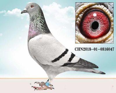 D10.�睢べR��曼起�c�血系x尤利斯・胡布里特.0816047