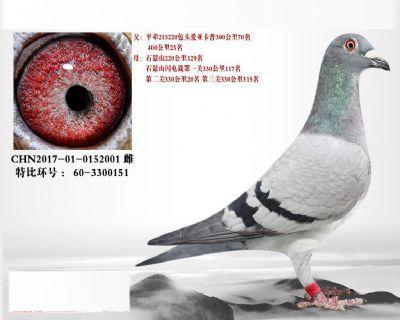 L2.波西瓦血系.3300151