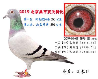 边长江.91.2019-01-0812896 雌