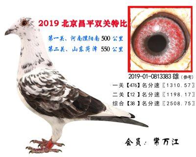 常万江.38.2019-01-0813383雄