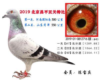 陈宝庆.187.2019-01-0812716雄