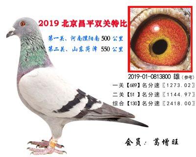 葛增旺,130,2019-01-0813800 雄