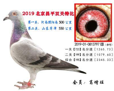 葛增旺.195.2019-01-0813797雄