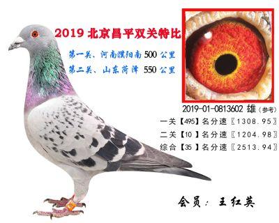 王红英.35.2019-01-0813602 雄