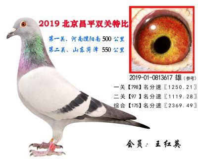 王红英.175.2019-01-0813617 雄