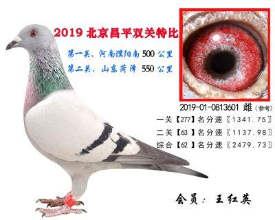 王红英.62.2019-01-0813601 雌