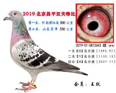 王跃.24.2019-01-0812643 雌