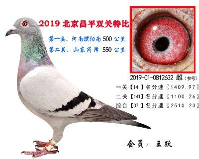 王跃.37.2019-01-0812632 雌