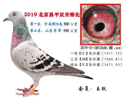 王跃.72.2019-01-0812646 雌