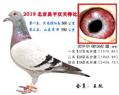 王跃.106.2019-01-0812642 雄