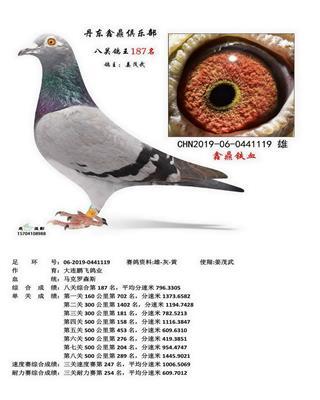丹东鑫鼎八关鸽王187名