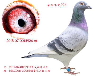 金羽�w戈926