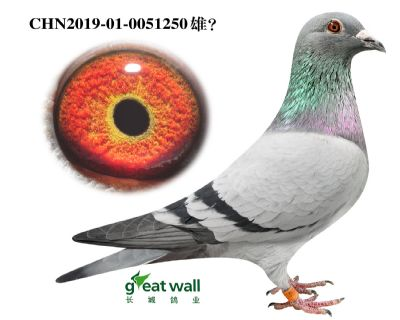 15.图尔斯x吉诺血系.0051250