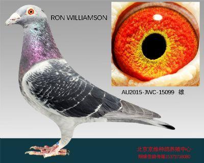 """""""RON WILLIAMSON""""-15099"""