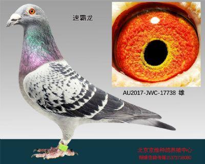 """""""速霸龙""""-17738"""