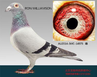 """""""RON WILLIAMSON""""-14975"""