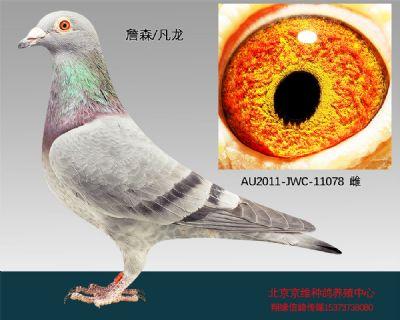 """""""詹森×凡龙""""-11078"""