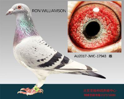 """""""RON WILLIAMSON""""-17943"""