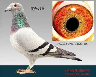 """""""詹森×凡龙""""-18122"""