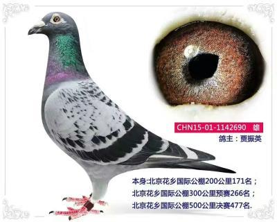 北京花香公棚1142690