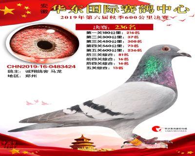 华东236