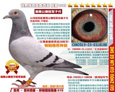 惠翔公棚冠军配11项冠军(特别推荐超级种鸽)