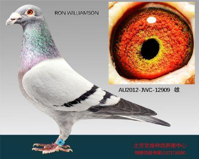 """""""RON WILLIAMSON""""-12909"""