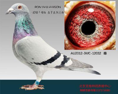 """""""RON WILLIAMSON""""-12032"""