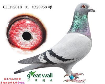 3.修长莫子代.0328958