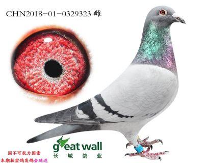 4.速霸龙血系.0329323