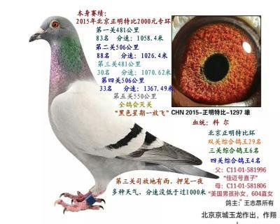 北京正明特比四关鸽王4名