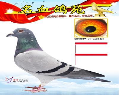 此鸽勿拍、资料有误