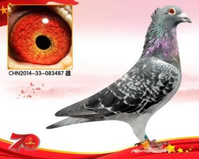 鸟冠杨阿腾