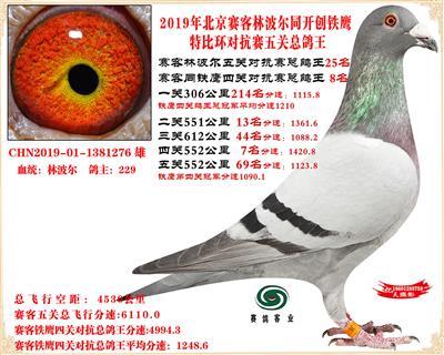19北京赛客林波尔同铁鹰1.25万羽对抗四总鸽王25名