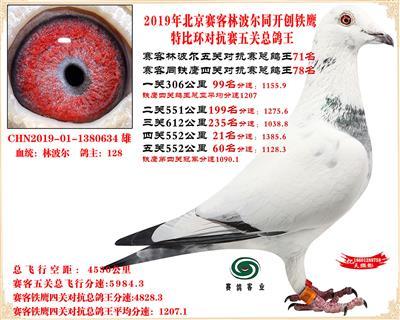 19北京赛客林波尔同铁鹰1.25万羽对抗四总鸽王71名